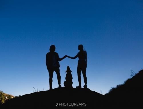 Pet Photographer, dog photography session England Thor